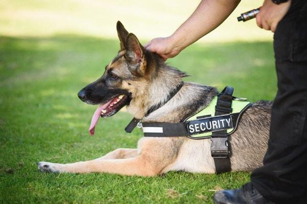 Beveiliging Amsterdam - Beveiligingsbedrijf Amsterdam - Security Amsterdam - Direct Security Services - DSS Security - Honden Beveiliging Amsterdam